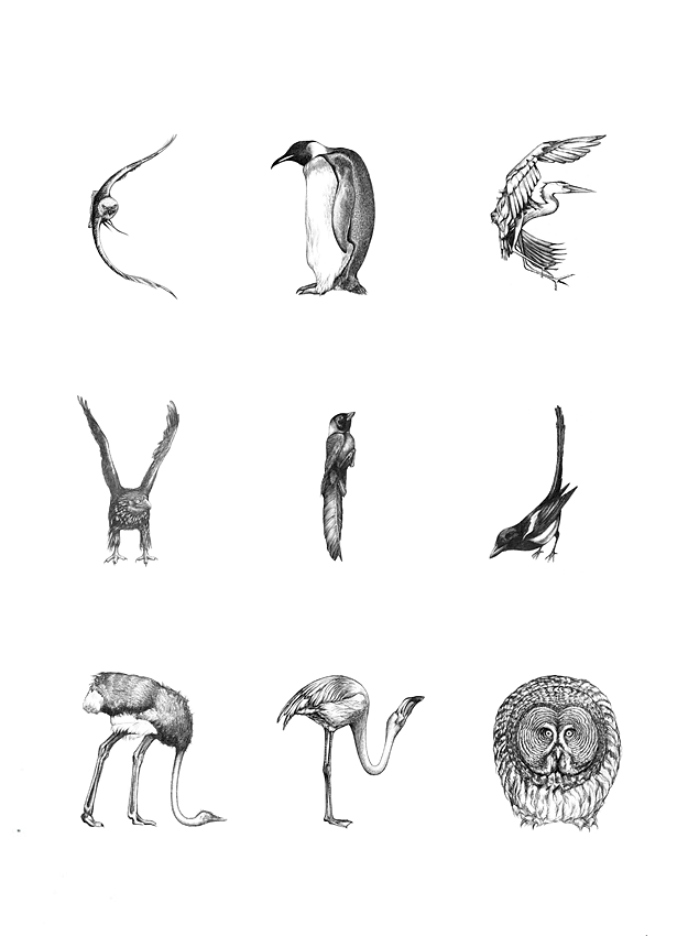 Bird alphabet, close-up