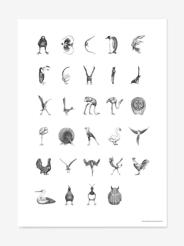 Swedish bird alphabet/ Fågelalfabet