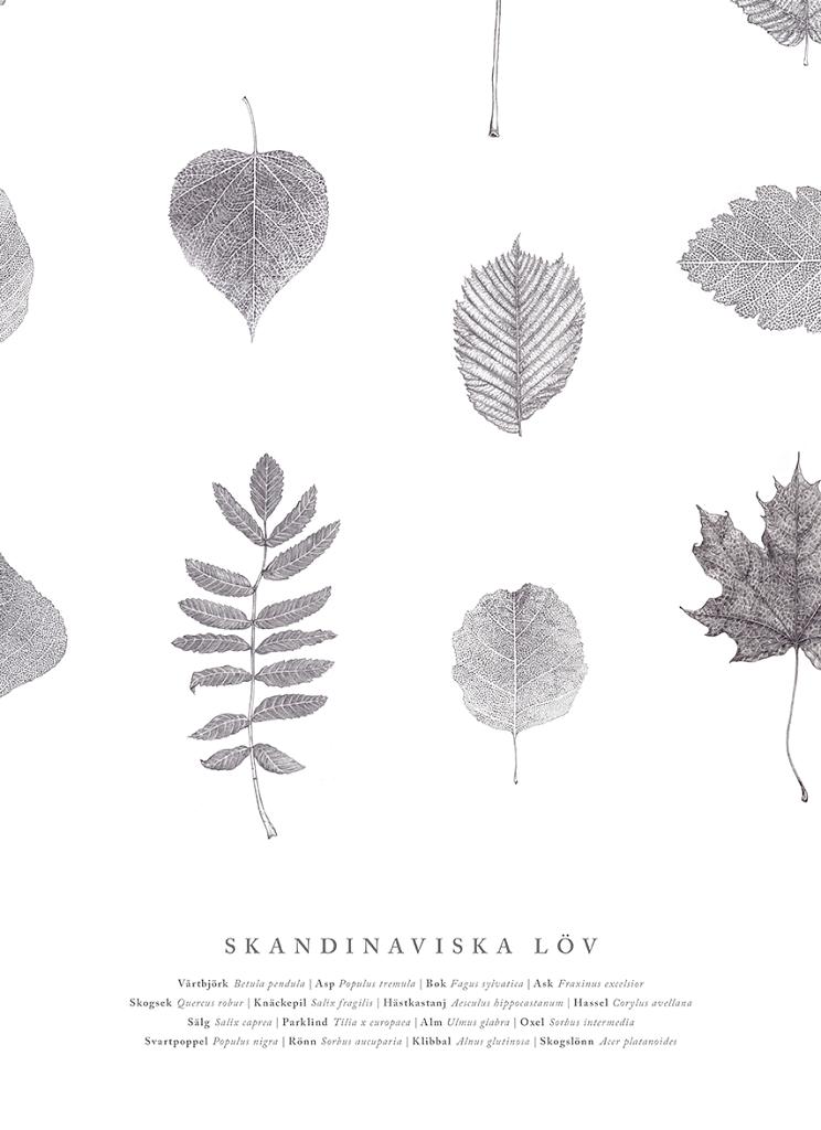 Skandinaviska löv, close-up