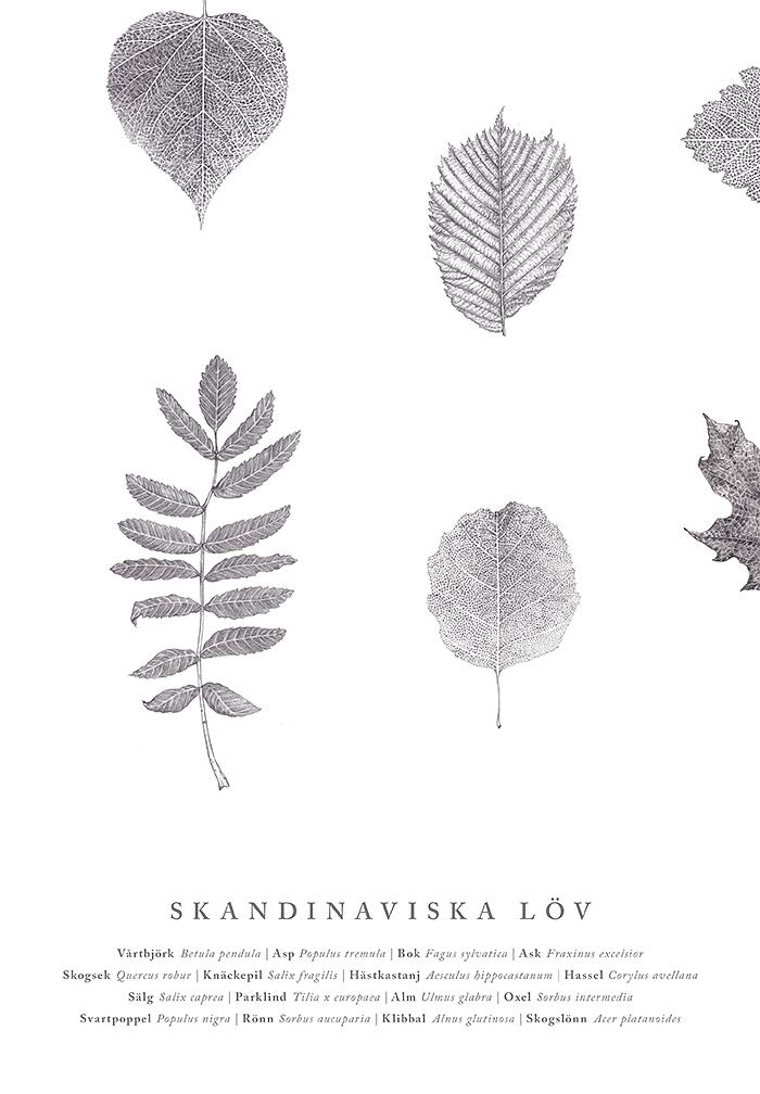 Skandinaviskablad-narbild.png