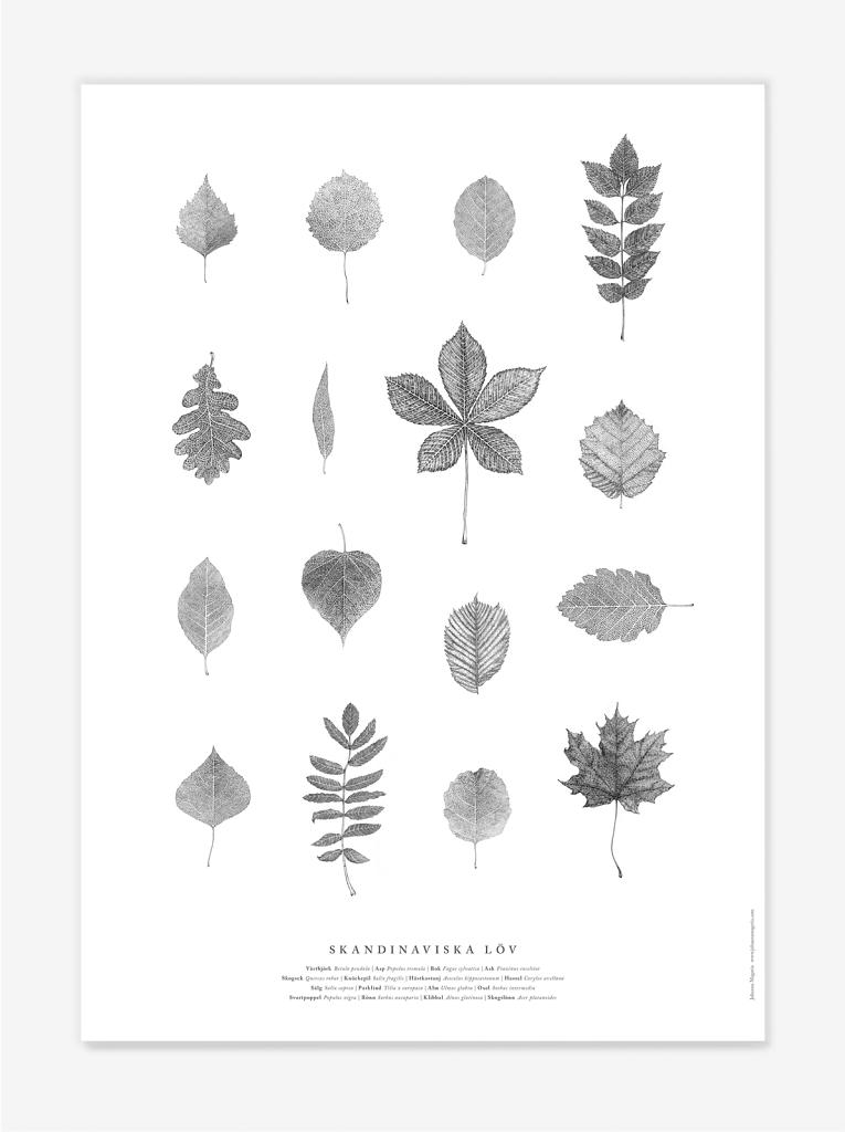 Skandinaviska löv
